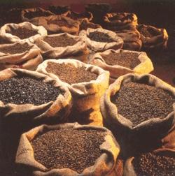 foto cafes em sacos abertos
