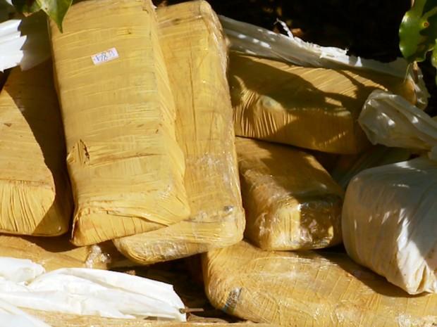 Operação da polícia de Paraguaçu, MG, apreendeu 55 kg de maconha em fazenda (Foto: Reprodução/EPTV)