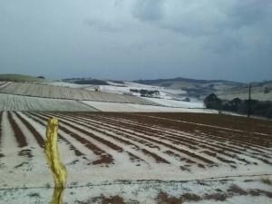 Granizo destruiu plantações em São João da Mata (Foto: Amauri da Costa/Arquivo pessoal)