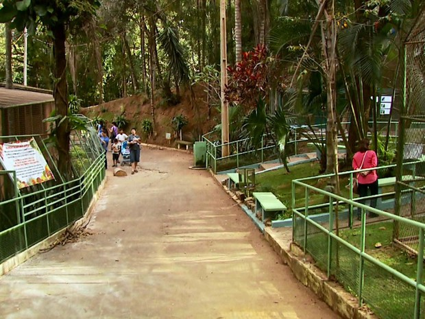 Após queda de árvores, Zoológico de Varginha é interditado para manutenção (Foto: Reprodução EPTV)
