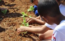 Projeto semeadores colhem primeiras plantações