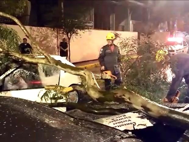Apesar da queda sobre os carros, ninguém ficou ferido em Varginha (Foto: Bruno Oliveira / EPTV)