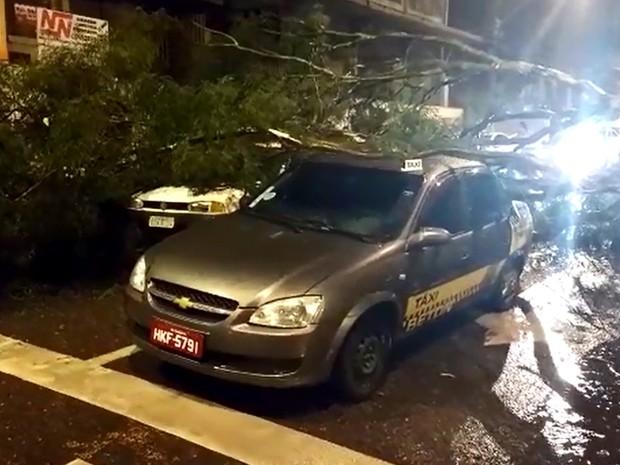 Árvore cai sobre carros durante chuva na Avenida Rio Branco, em Varginha (Foto: Bruno Oliveira / EPTV)