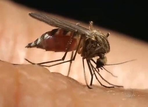 Três casos e duas mortes pela doença já estavam confirmados na cidade.
