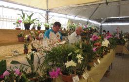 Exposição Nacional de Orquídeas no primeiro final de semana de agosto, será seciado pela cidade de Varginha