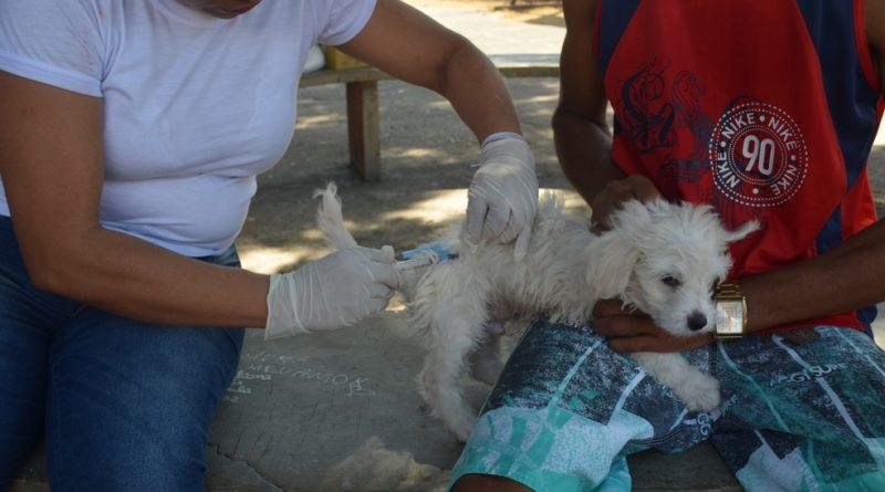 Mutirão de vacinação antirrábica espera imunizar 600 animais em Varginha