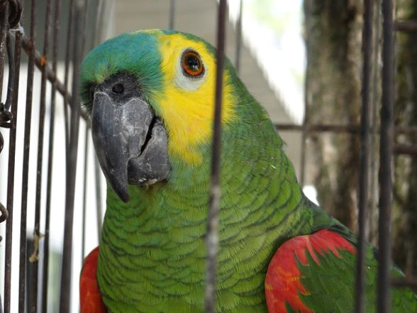 Varginhenses entregam 51 animais silvestres durante campanha