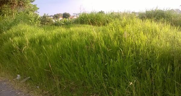 O corpo de um homem de 32 anos foi encontrado na tarde desta segunda-feira (26) em um matagal no bairro Jardim Canadá, em São Sebastião do Paraíso